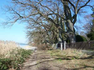 Knorrige Bäume begleiten unseren Weg